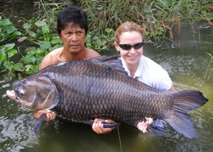 Carp fishing in Thailand - largest carp ever landed by a female angler