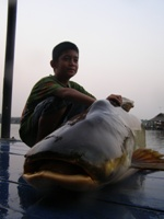 Fishing in Thailand - Land of the Giant Fish