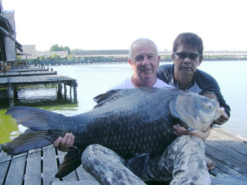 Siamese carp fishing in Thailand