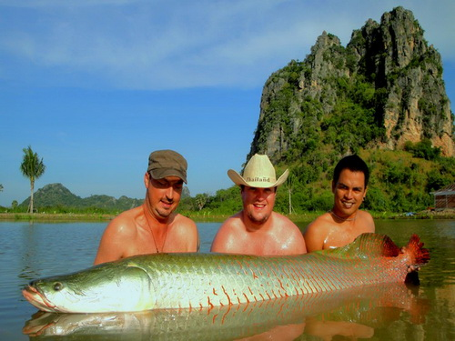 arapaima fishing in thailand